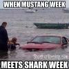 MustangWeek meets SharkWeek Meme_1